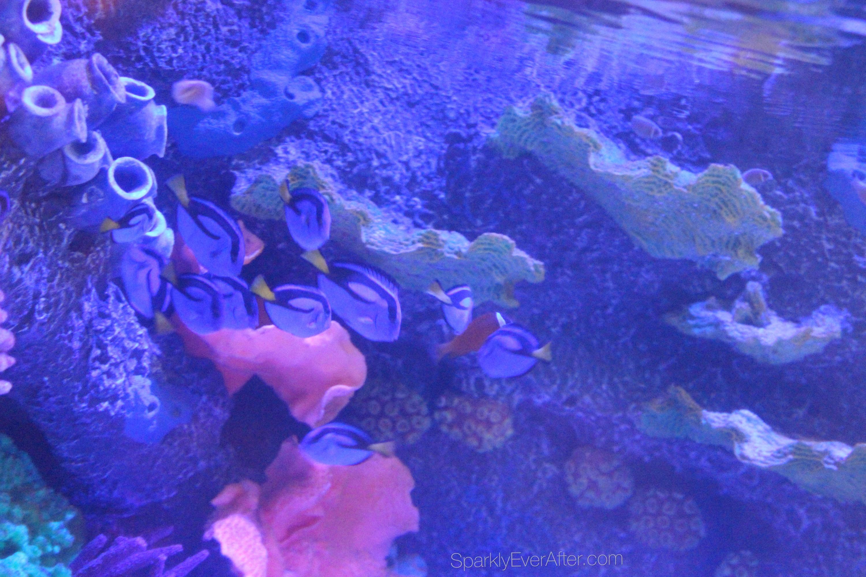 SEA LIFE Orlando Aquarium Review - SparklyEverAfter.com