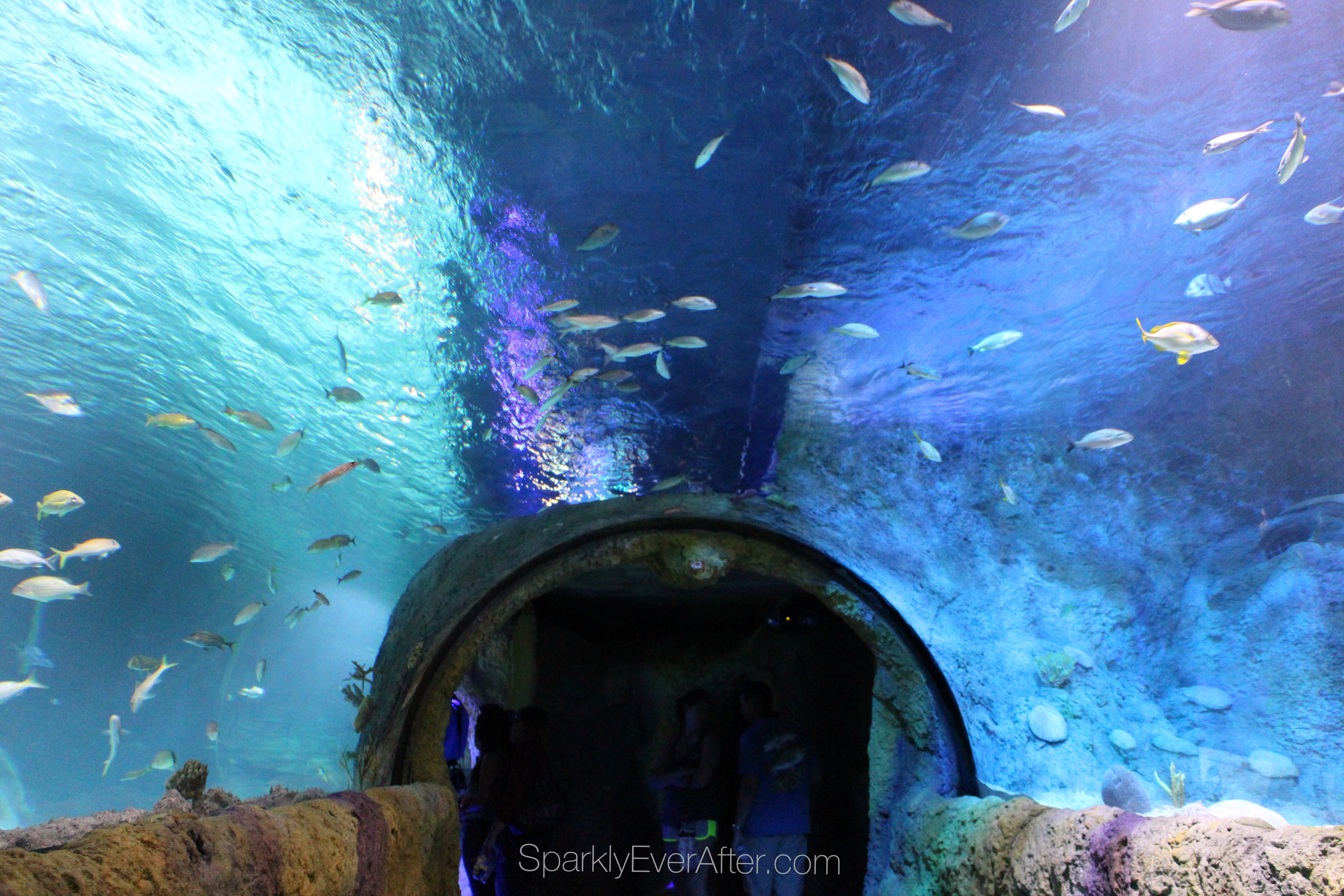 Sea Life Orlando Aquarium Review